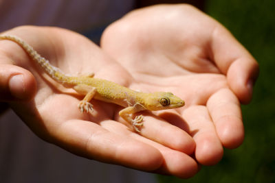 reasons why lizards are good pets